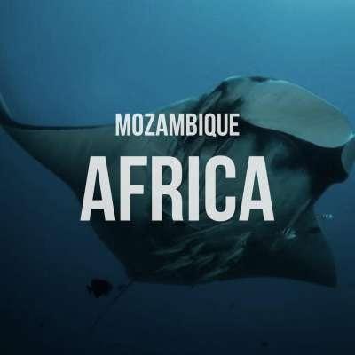AFRICA MOÇAMBIQUE - KRUGER SAFARI